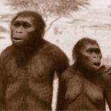 ビタミンDと人類の進化